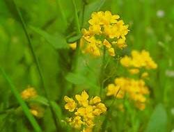 ©Healing Herbs